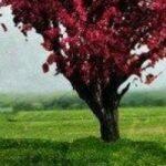 cropped-Arbre-coeur1.jpg