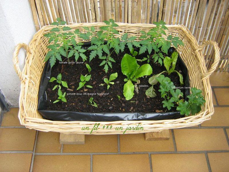 Le potager bonheur conomie et bien tre sacr bonheur for Jardinage pour les nuls