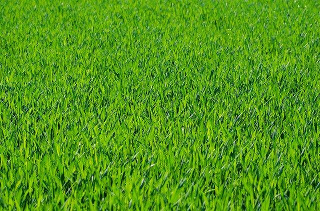 L'herbe est toujours plus verte ailleurs